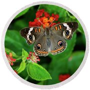Common Buckeye Butterfly Round Beach Towel by Betty LaRue