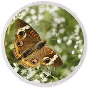 Common Buckeye Butterfly On White Thoroughwort Wildflowers Round Beach Towel by Kathy Clark