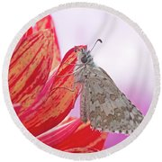 Common Checkered Skipper Round Beach Towel