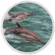 Common Dolphins Round Beach Towel by David Stribbling