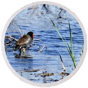 Common Gallinule Round Beach Towel by Gary Wightman