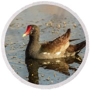 Round Beach Towel featuring the photograph Common Gallinule by Robert Frederick