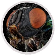 Common Green Bottle Fly Round Beach Towel