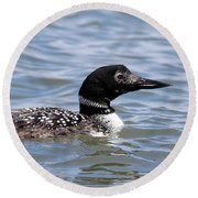 Common Loon Port Jefferson New York Round Beach Towel