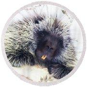 Common Porcupine Round Beach Towel