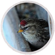 Round Beach Towel featuring the photograph Common Redpoll by Ann E Robson