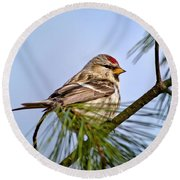 Round Beach Towel featuring the photograph Common Redpoll Bird by Christina Rollo