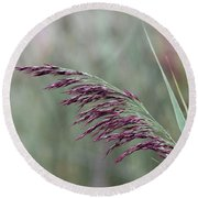 Round Beach Towel featuring the photograph Common Reed Flower Stalk by Scott Lyons