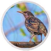 Common Starling - Sturnus Vulgaris Round Beach Towel