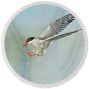 Common Tern In Flight Round Beach Towel
