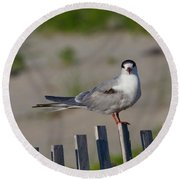 Common Tern Round Beach Towel