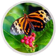 Common Tiger Glassywing Butterfly Round Beach Towel by Amy McDaniel