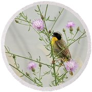 Common Yellowthroat Round Beach Towel