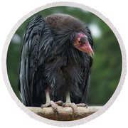Condor On A Perch Round Beach Towel