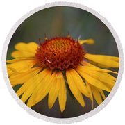 Cone Flower Round Beach Towel