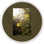Coneflower In The Sun Round Beach Towel