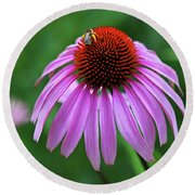 Round Beach Towel featuring the photograph Coneflower by Judy Vincent
