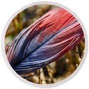Congo African Grey Feather Round Beach Towel