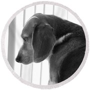 Contemplative Beagle Round Beach Towel