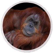 Contented Orangutan Round Beach Towel