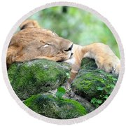 Contented Sleeping Lion Round Beach Towel by Richard Bryce and Family
