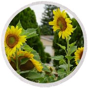Conversing Sunflowers Round Beach Towel