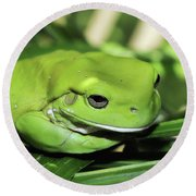 Cool Green Frog 001 Round Beach Towel