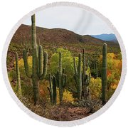 Coon Creek With Saguaros And Cottonwood, Ash, Sycamore Trees With Fall Colors Round Beach Towel