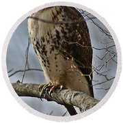 Cooper's Hawk 2 Round Beach Towel