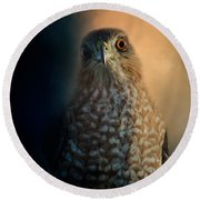 Coopers Hawk At Sunset Round Beach Towel