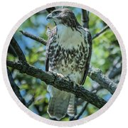 Coopers Hawk Img 2 Round Beach Towel