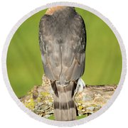Cooper's Hawk In The Backyard Round Beach Towel