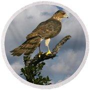 Cooper's Hawk On Watch Round Beach Towel