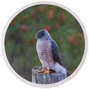 Coopers Hawk Perched Round Beach Towel