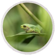 Cope's Gray Treefrog Round Beach Towel by Thomas Young
