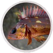 Copper Fish Round Beach Towel