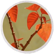 Copper Plant Round Beach Towel