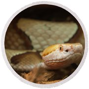 Round Beach Towel featuring the digital art Copperhead by Chris Flees