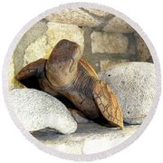 Round Beach Towel featuring the photograph Coral And Turtle Decor by Francesca Mackenney