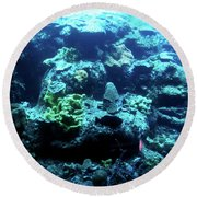 Round Beach Towel featuring the photograph Coral Art 4 by Francesca Mackenney