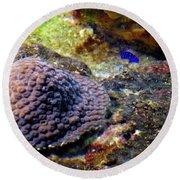 Round Beach Towel featuring the digital art Coral Art Cu 3 by Francesca Mackenney