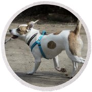 Corby The Dog Round Beach Towel
