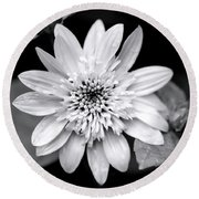 Round Beach Towel featuring the photograph Coreopsis Flower Black And White by Christina Rollo