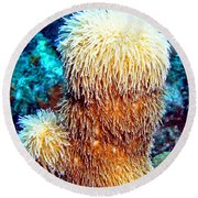 Round Beach Towel featuring the photograph Corky Sea Finger Coral - The Muppet Of The Deep by Amy McDaniel