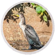 Round Beach Towel featuring the photograph Cormorant On Shore by Paul Freidlund