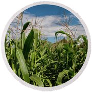 Round Beach Towel featuring the photograph Corn 2287 by Guy Whiteley