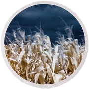 Round Beach Towel featuring the photograph Corn Field by Helga Novelli