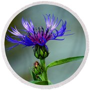 Round Beach Towel featuring the photograph Cornflower by Rodney Campbell