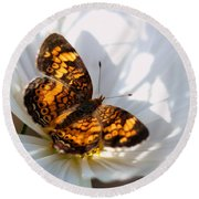 Pearl Crescent Butterfly On White Cosmo Flower Round Beach Towel