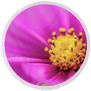 Round Beach Towel featuring the photograph Cosmos Pink Sensation by Sharon Mau